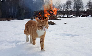 10+ Pics Proving That Cats Are Actually Demons