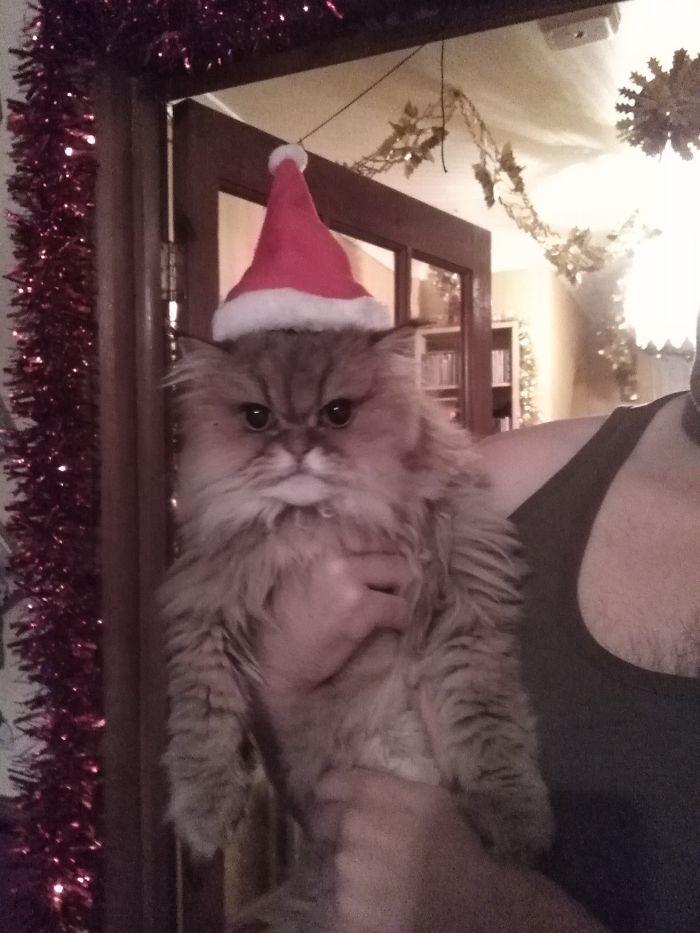Christmas Alfie