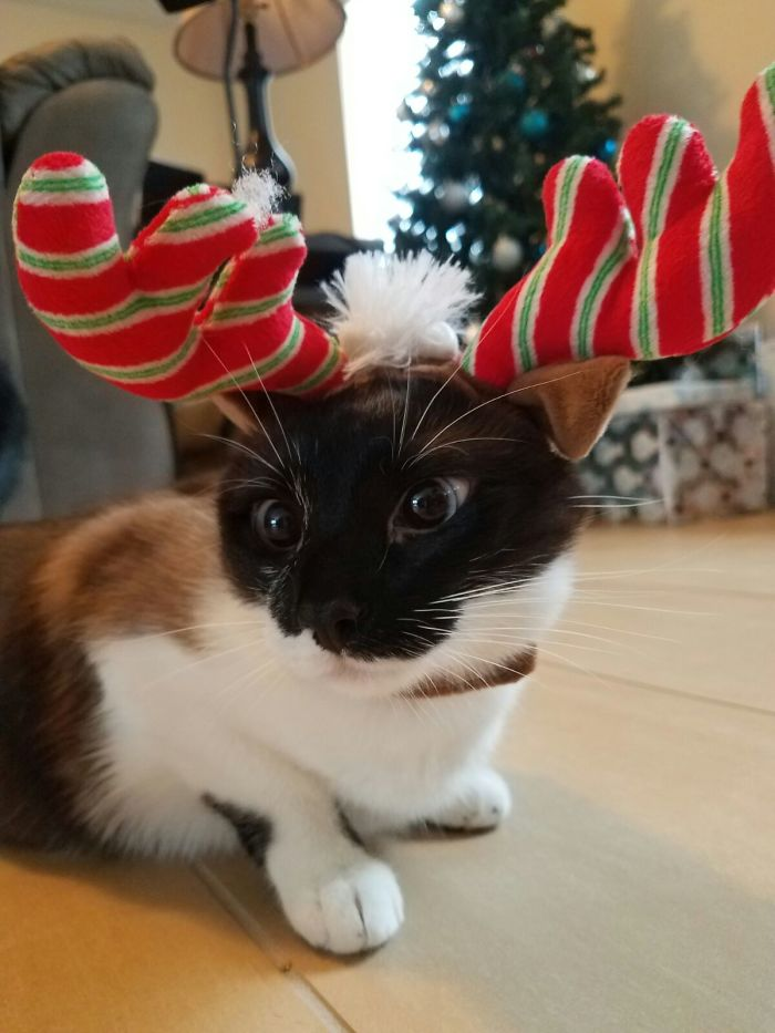 This Little Lady Is Not Amused With Her New Antlers...