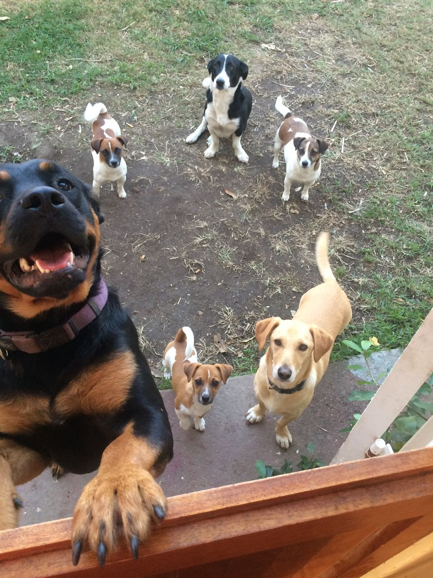 A Mixed Bunch Waiting For A Walk!
