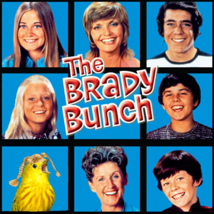 The Birdy Bunch