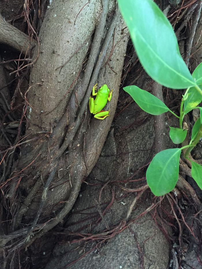 Tree Frog. Gorgeous Color!