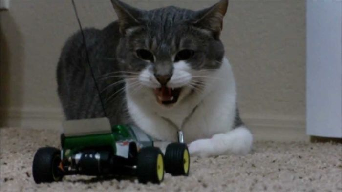 This Cat Reacting To Remote-control Car
