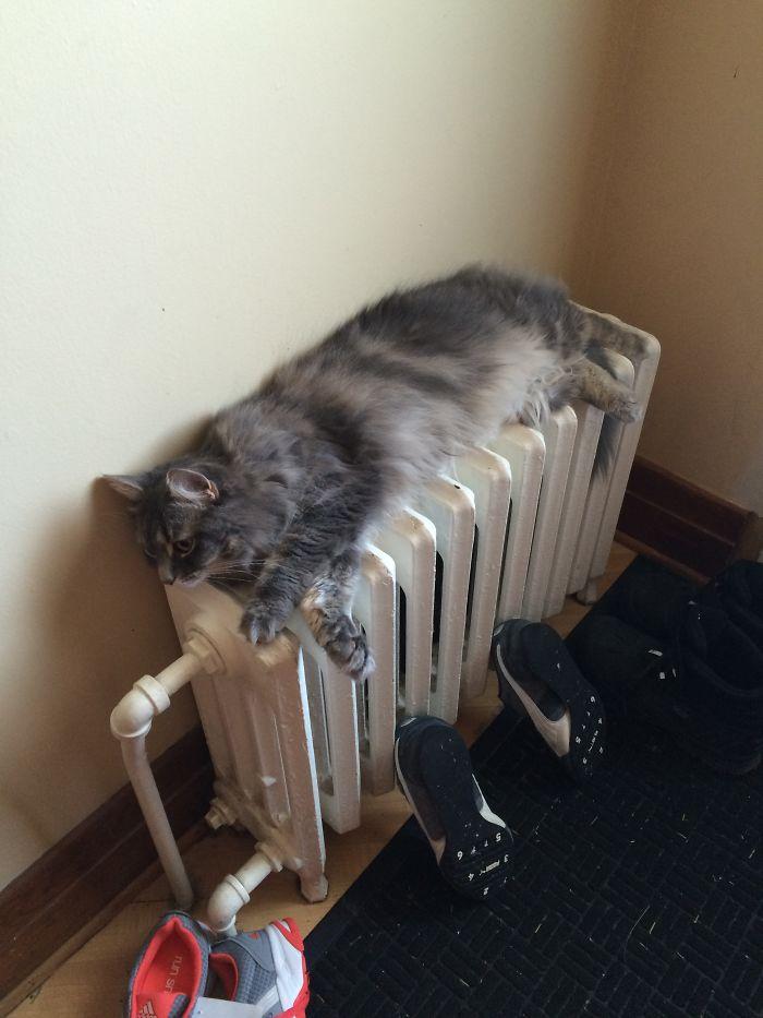 Metled Cat