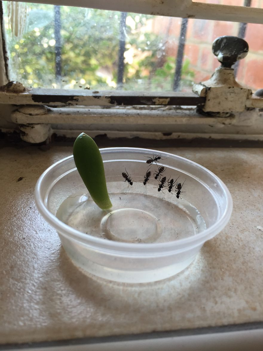 I Put This Succulent In Water To Grow Roots And Had Some Visitors On A Hot Day!