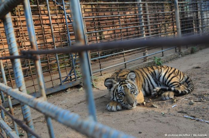 Animals Caged