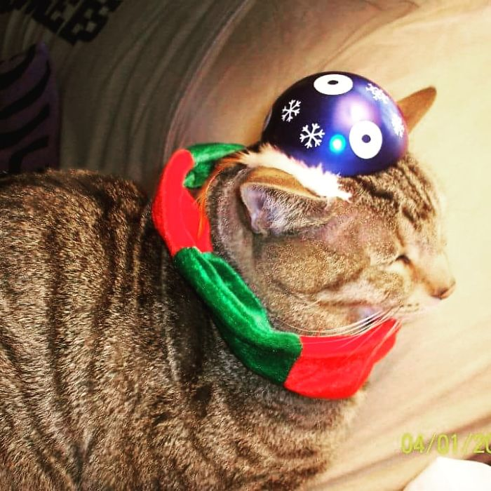 Remy Dressed In His Holiday Scarf And Tin Hat…he Doesn't Care!