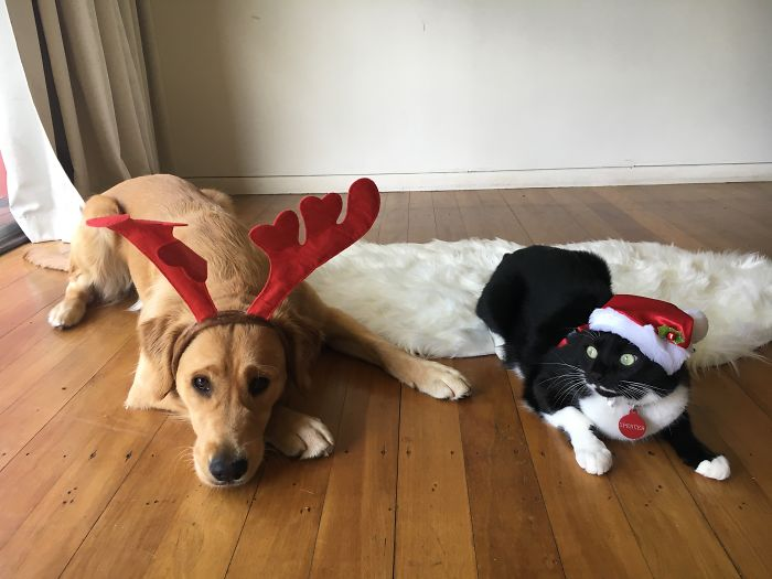 Peach - Santas Reindeer And Spencer - The Christmas Grinch