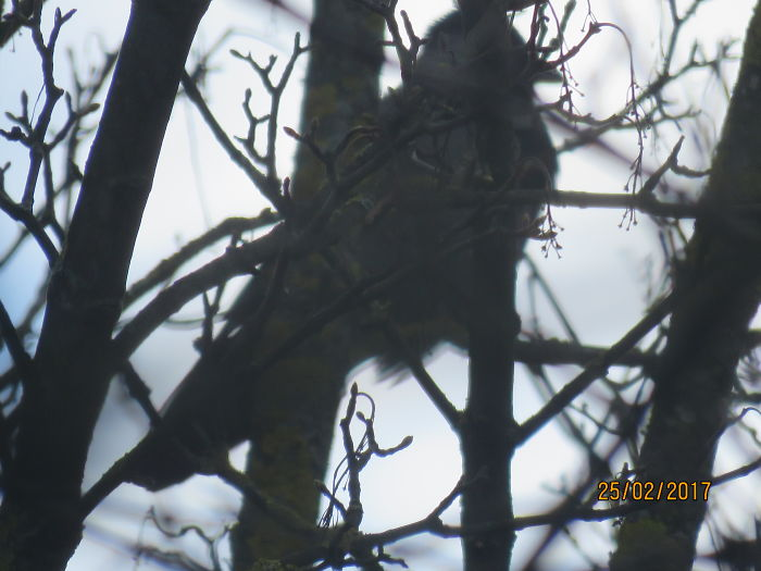 Devil's Face On Bird's Back
