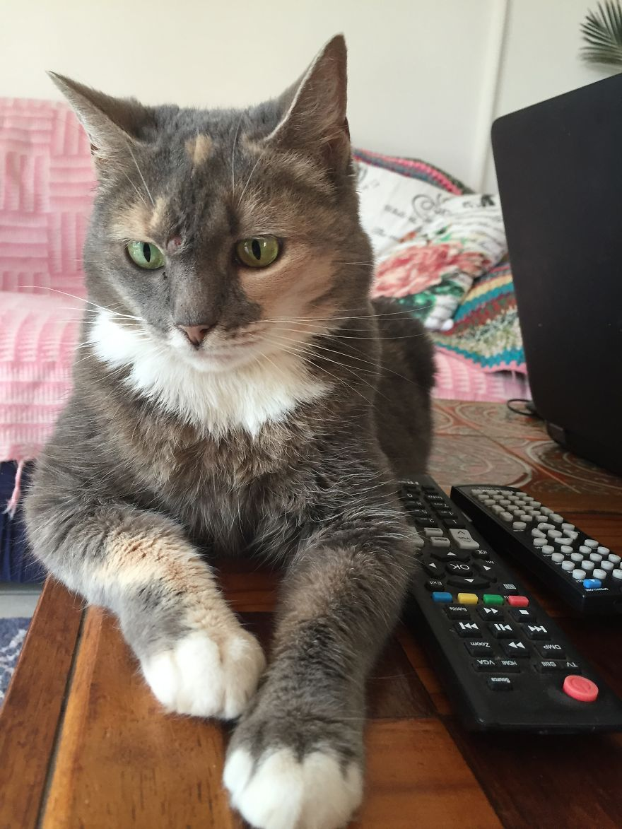 Chloe Aka Grey Cat