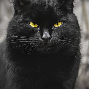 Portraits Of Stray Cats