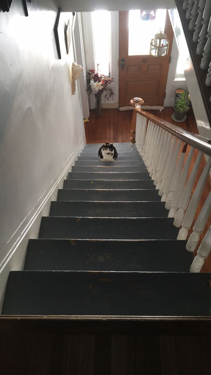 Everytime I Turned Around, Miss Kitty Was One Step Higher…