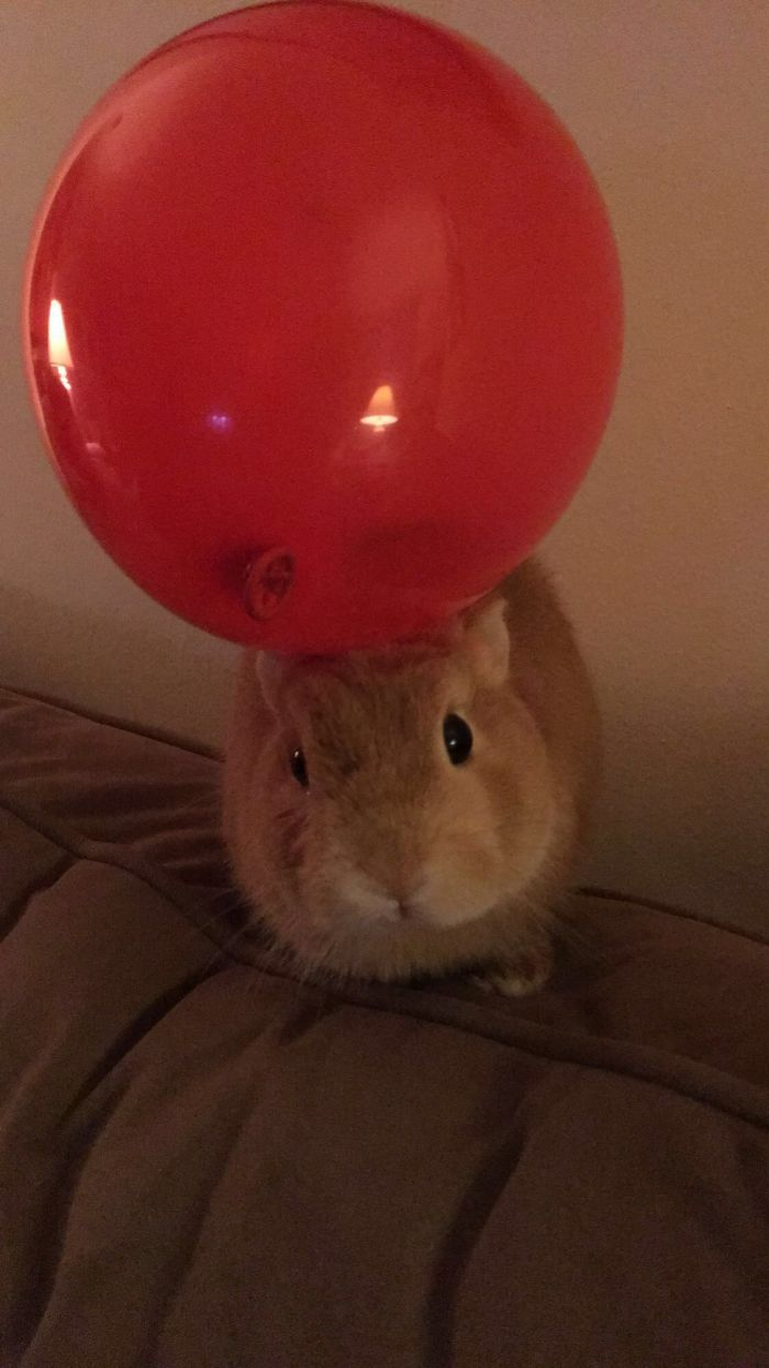 He's Not Too Fond Of Balloons 🎈