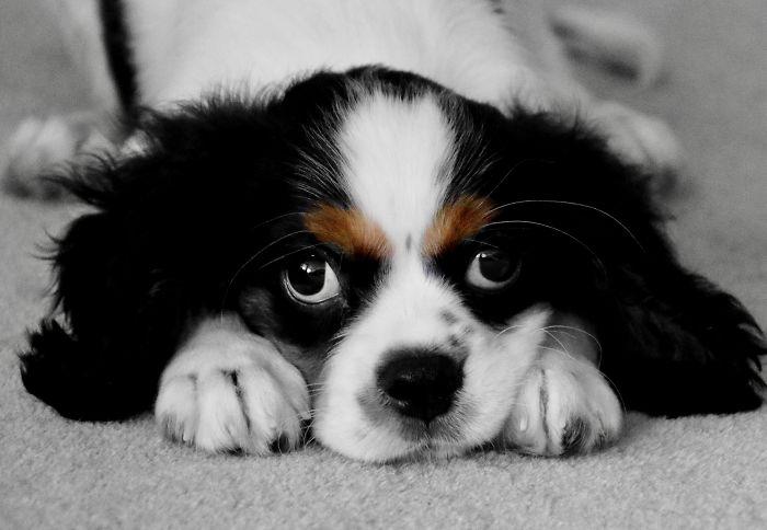 My Love Puppy Roger