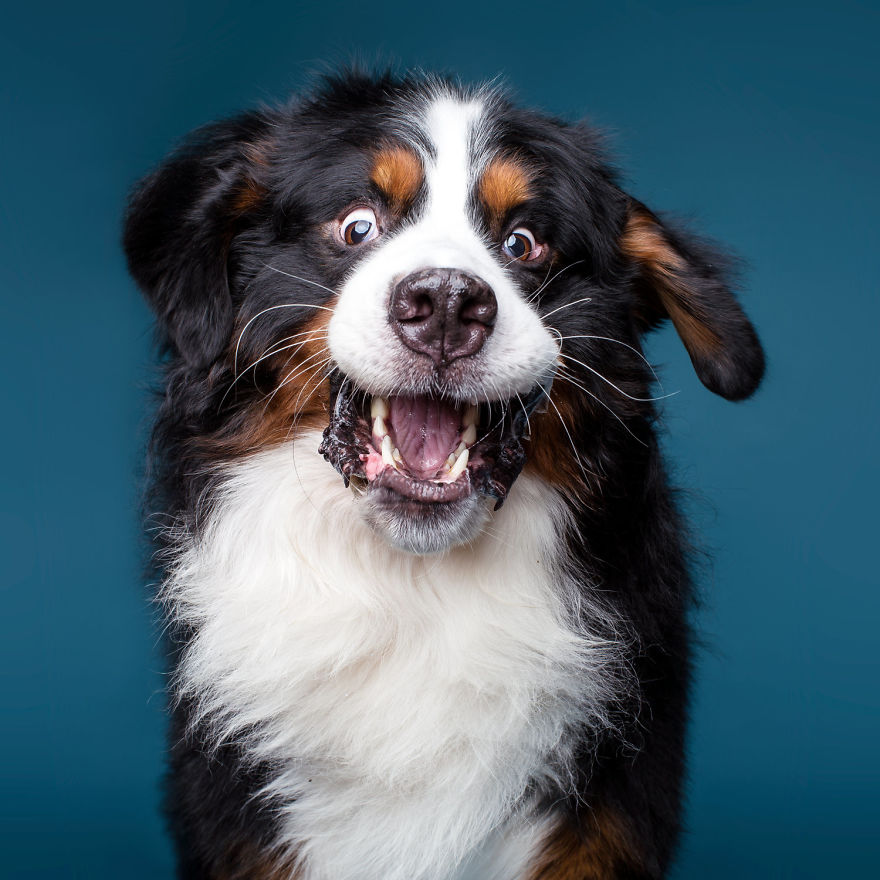 I'm A Dog Photographer Who Specializes In Derpy Expressions