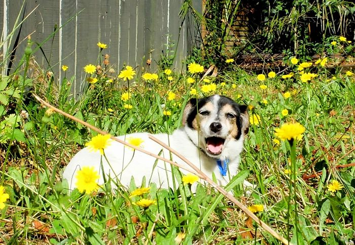 Jill Sat In A Backyard In The Sun For The First Time, I Think She Enjoyed The Flowers