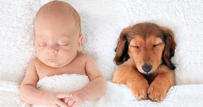 10+ Pics That Prove Dogs Are Better Than A Pillow