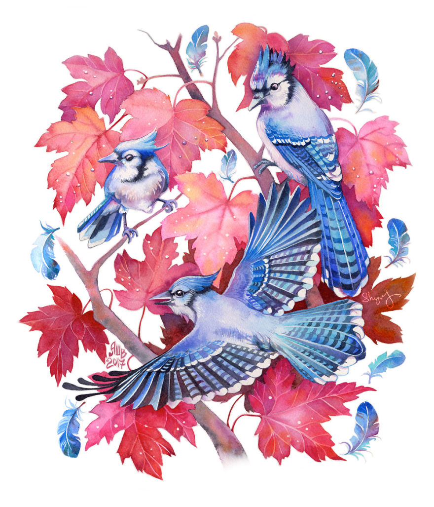 Bluejays In A Maple Tree
