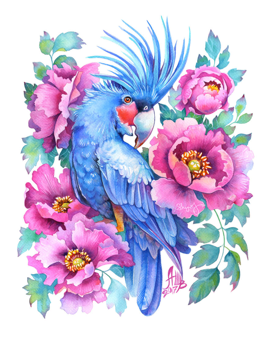 Blue Palm Cockatoo
