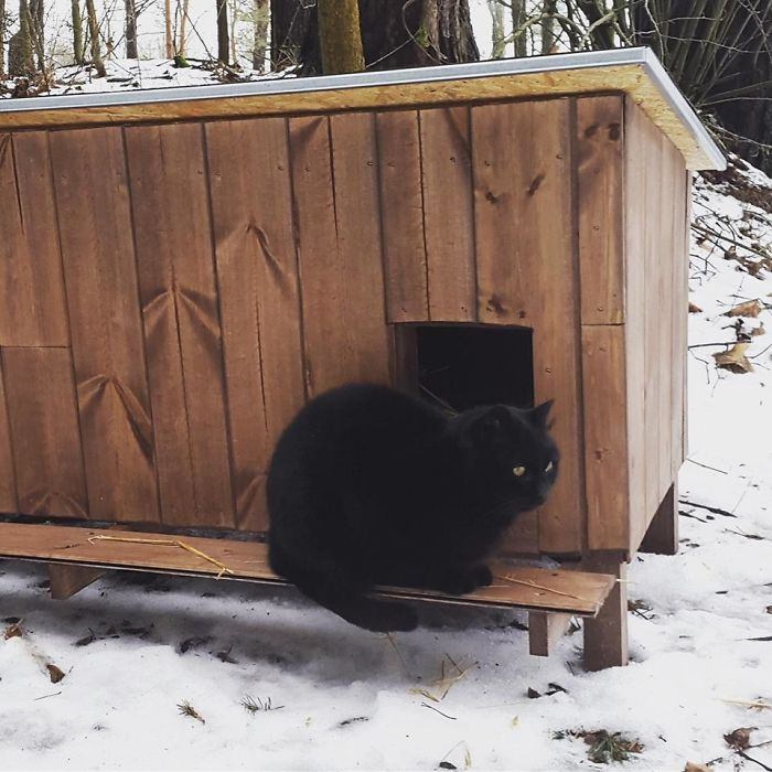 How To Build A House For Homeless Cats