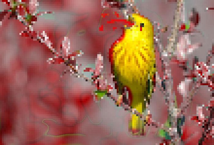 8 Bit Bloody Bird!
