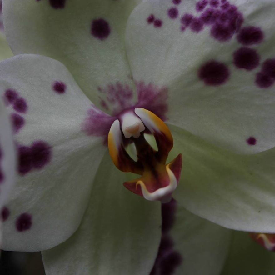 Roaring Orchid Photography