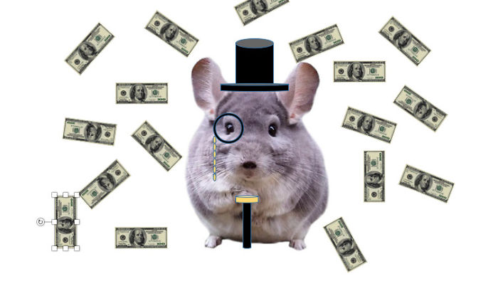 Chinchilla Be Rich$$$$$$$$$$$$$$$$$