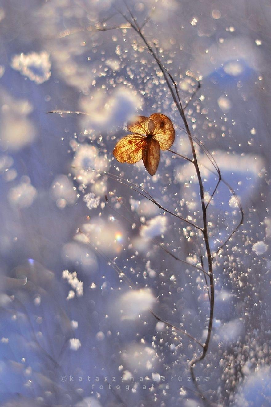 Snow Variation