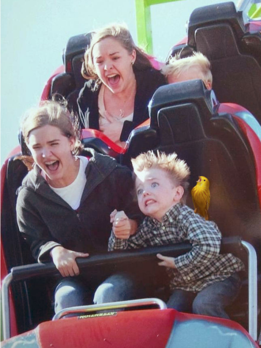 Screaming Bird On The Rollercoaster