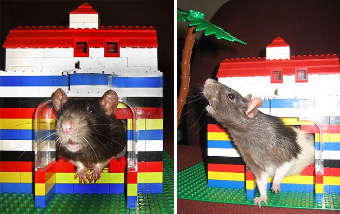Lego Rat Cave