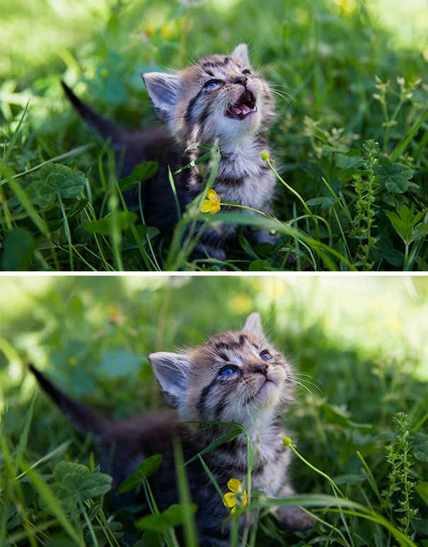 Two Week Old Foster Kitten Meeting The Sun For The First Time