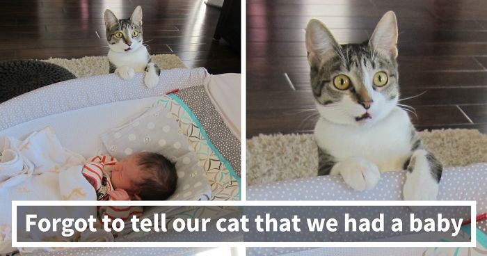 326 Times Animals Did Things For The First Time, And Had The Funniest Reactions