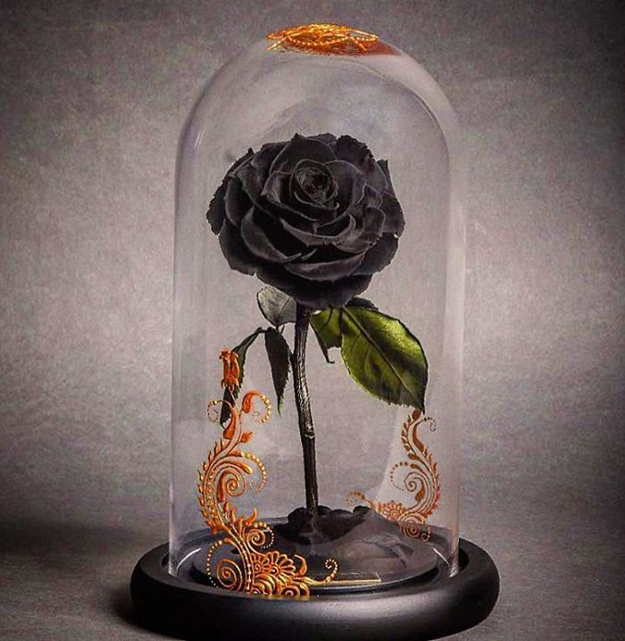 real beauty and the beast roses exist and they ll last