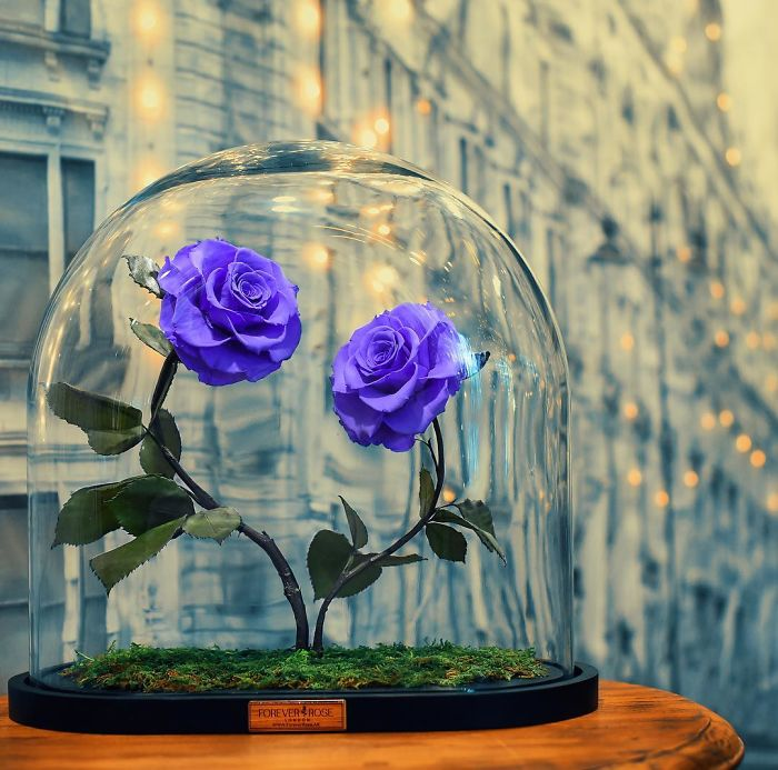 Bunga Beauty And The Beast Ini Bisa Anda Miliki Lho