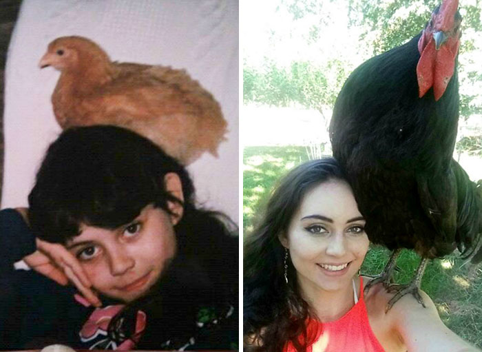 Nearly 20 Years Later, Chickens Are Still My Best Friend