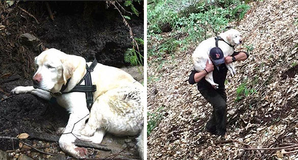 Blind Dog Is Found In The Mountains 8 Days After She Disappeared