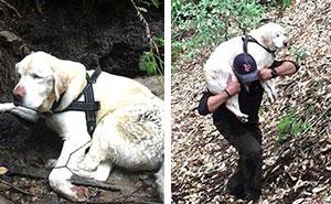 Este perro ciego fue encontrado en las montañas tras 8 días desaparecido