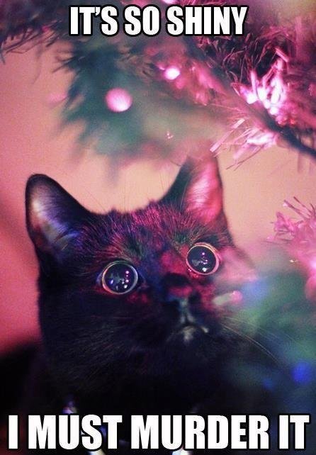 cat-its-sot-shiny-i-must-murder-it-58c284583998f.jpg