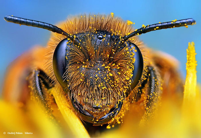 Cheerios Will Send You 500 Wildflower Seeds For Free To Help Save The Bees