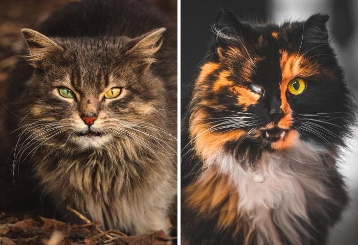 Retrato de forma cercana a los gatos callejeros de mi ciudad