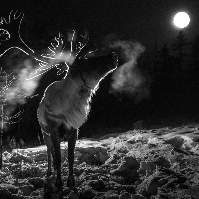 I Documented Mongolia's Mystical Tsaatan Reindeer People