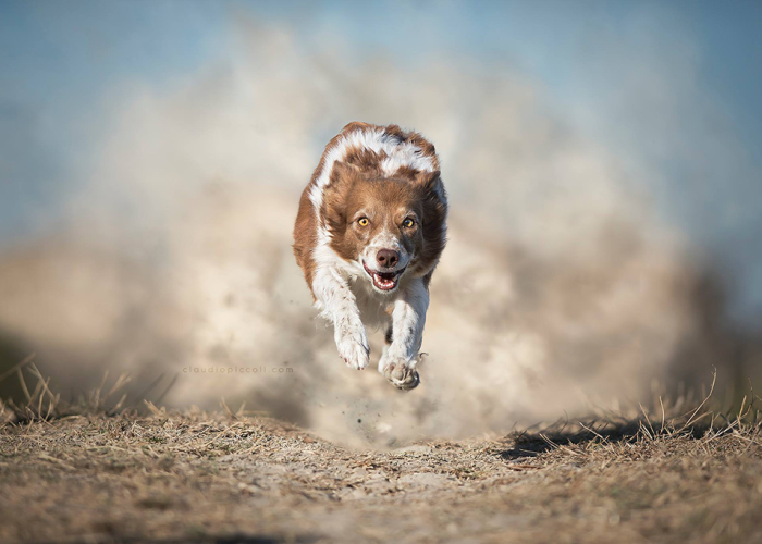 "I Photograph ""Flying Dogs"" To Reveal Their True Spirit"