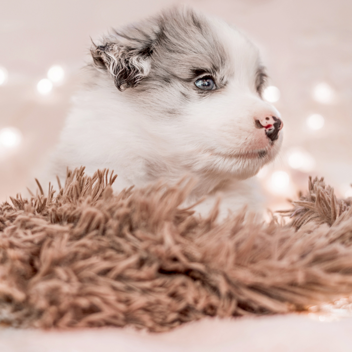 I Took Some Photos Or Adorable Babies With Little Paws