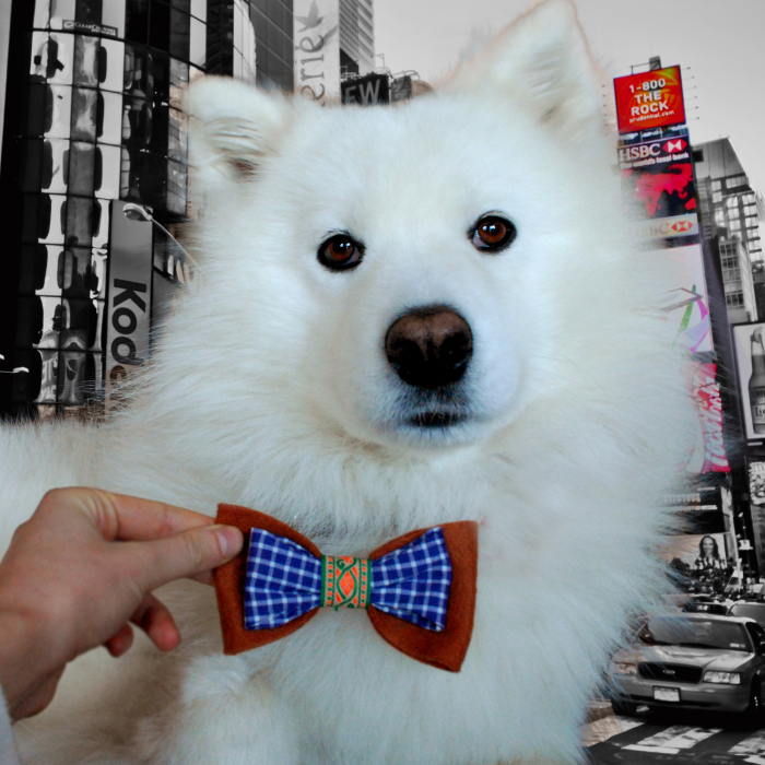 I Make Bow Ties For Dogs And Their Owners