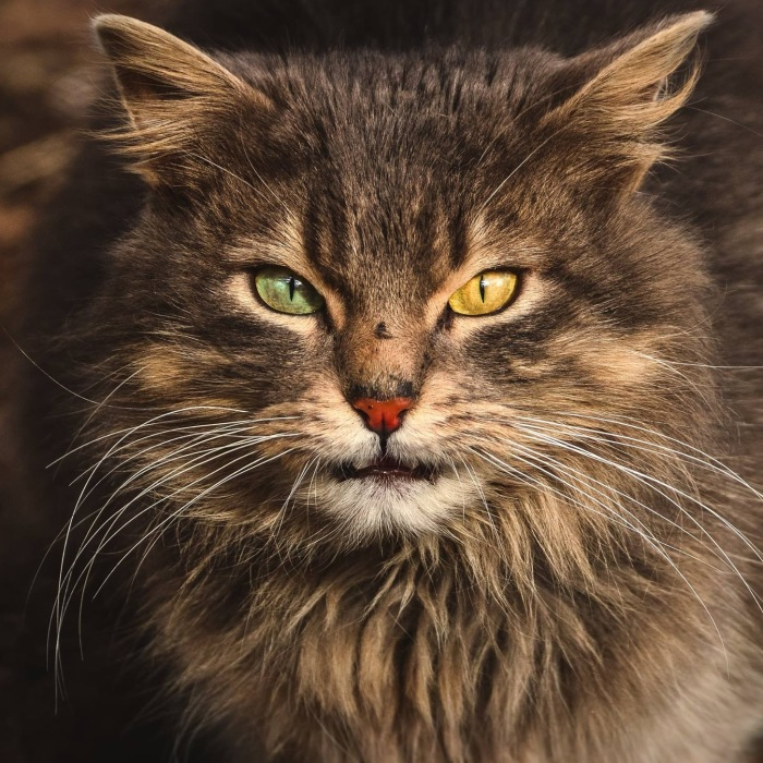 Intimate Portraits Of Stray Cats That I Took In My Hometown