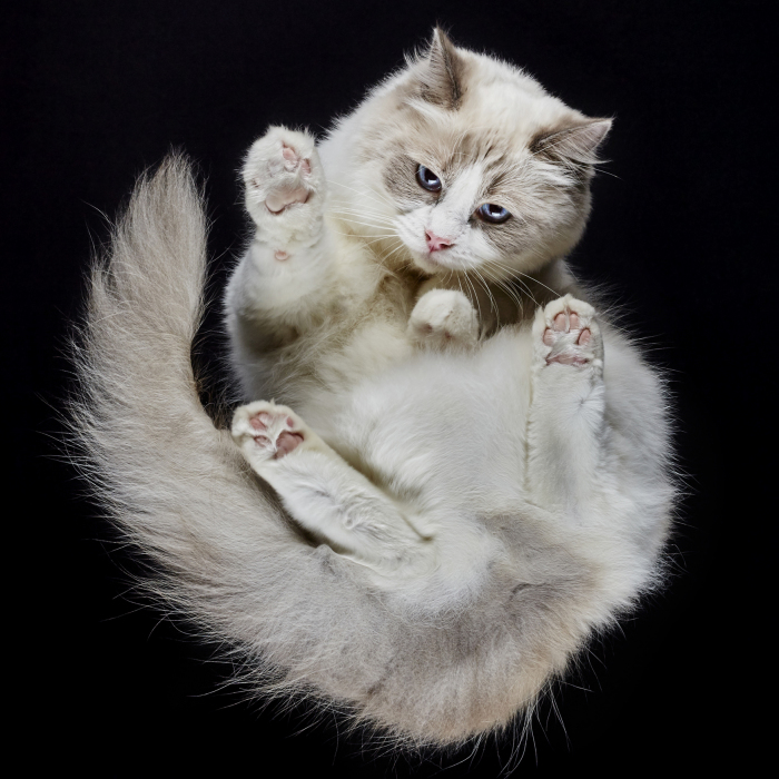 Under-Cats: I Photograph Cats From Underneath (Part 2)