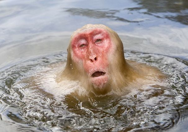 This Monkey Is Dissolving