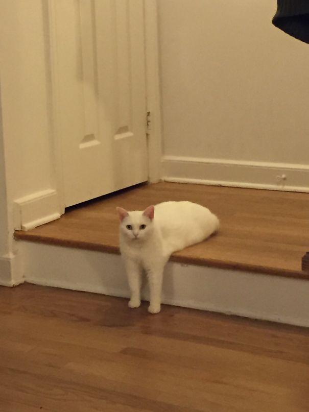 Melting Cat
