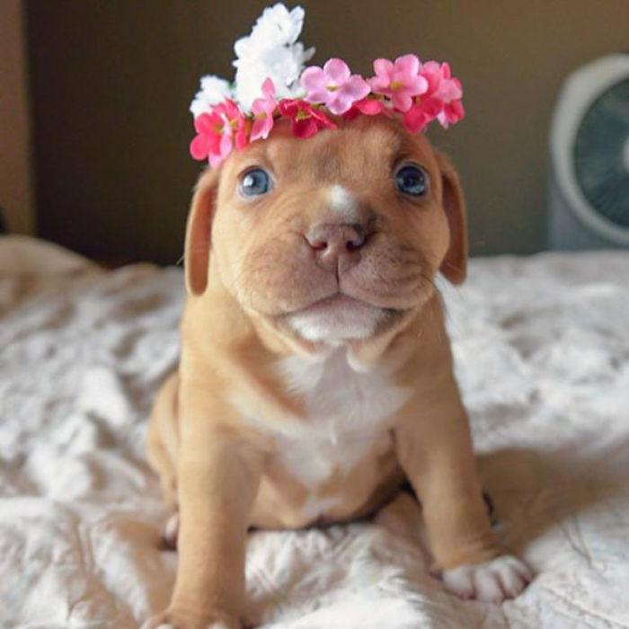 Little Penny