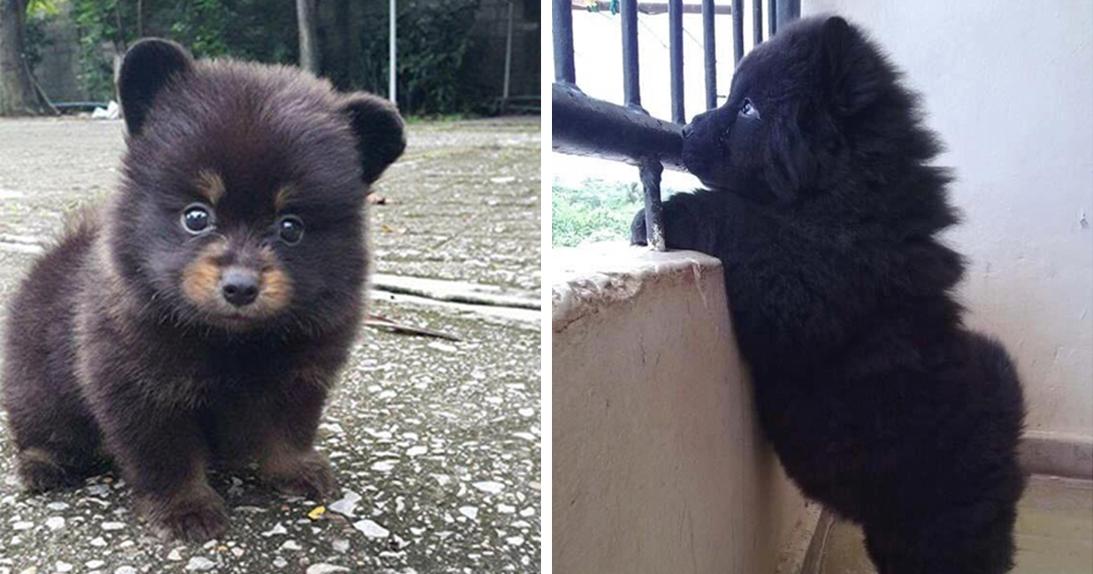 10 puppies that are too adorable to be real bored panda